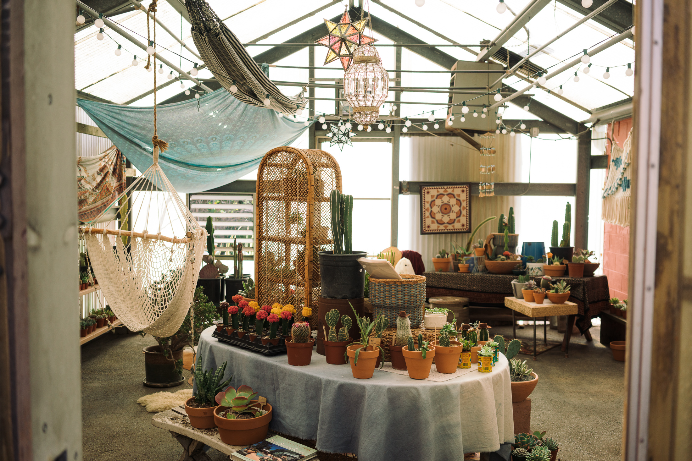 The Cub House shares the building with Prickley Pals, a succulent garden store, owned by Talkington's girlfriend, Carla Alcibar, a former retail merchandiser for Anthropologie and Free People. Alcibar designed The Cub House's layout and does the shop's merchandising.
