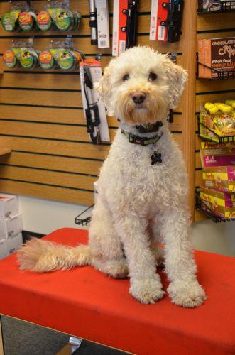A Utah shop dog.
