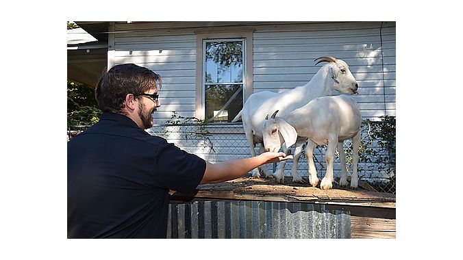 Derek Goltz of Dealer Tour sponsor Finish Line feeds one of Charlotte Cycles' three goats who keep the grass low in a lot adjacent to the store.