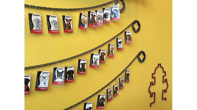 Even dogs wear badges at QBP! Employees frequently bring their four-legged friends to the office.