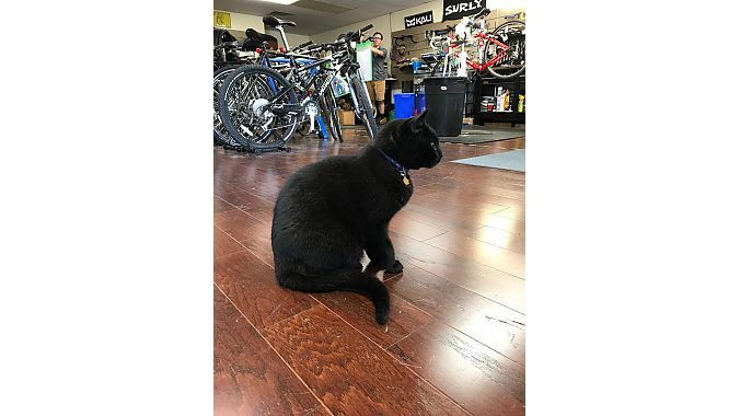 Family Bicycles' shop cat, Surly, was unimpressed with the Dealer Tour.