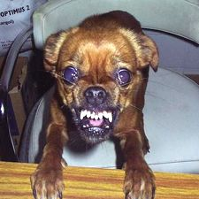 demented dogs - photo #33